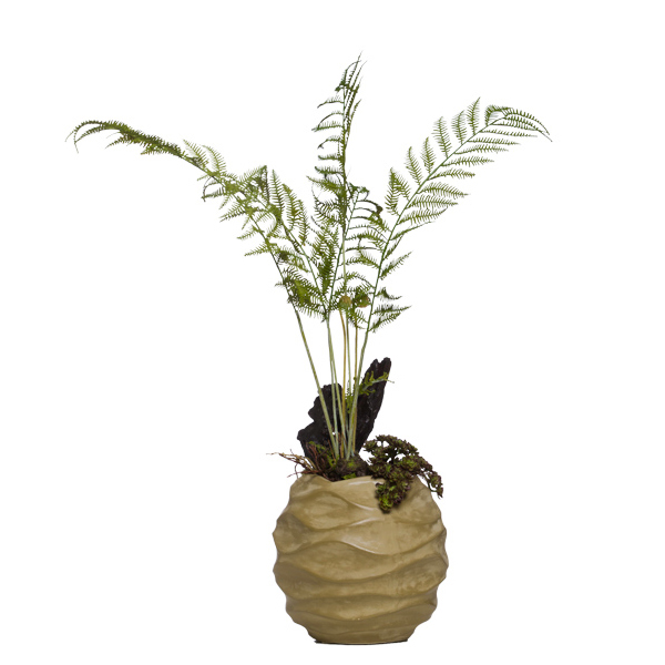 Wood Fern in Wavy Bowl
