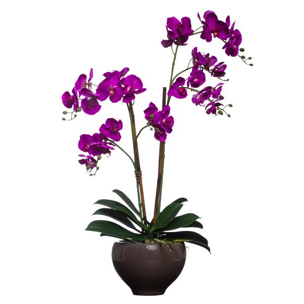 Fuchsia Double Wild Orchid