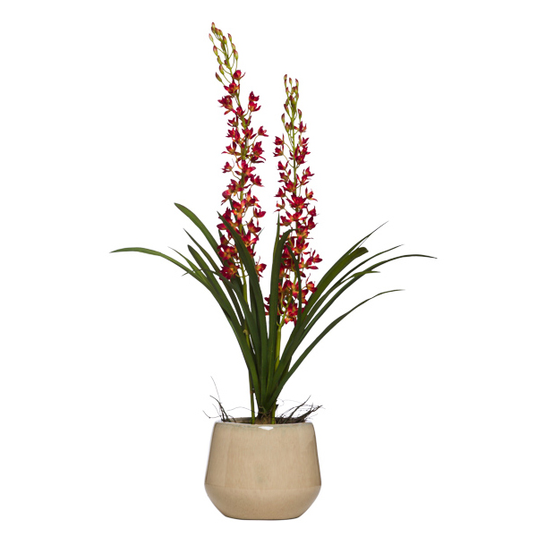 Mini Cymbidium in Round Cream Pot
