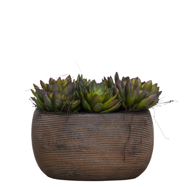 Succulents in Square Brown Pot