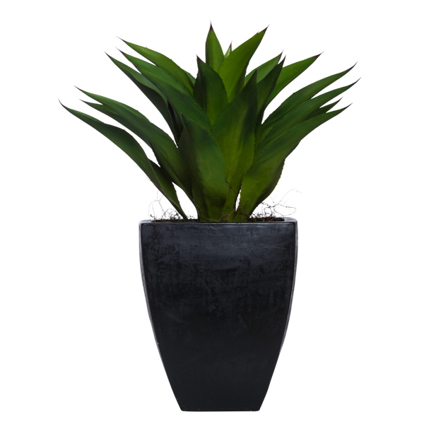 Succulent/MD in Square Black Resin