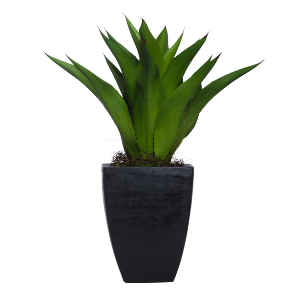 Succulent in Small Square Black Resin