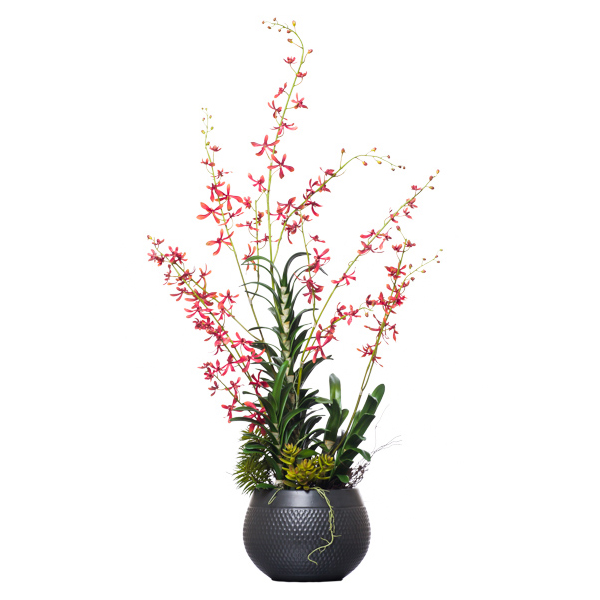 Rust Vanda in Black Round Pot