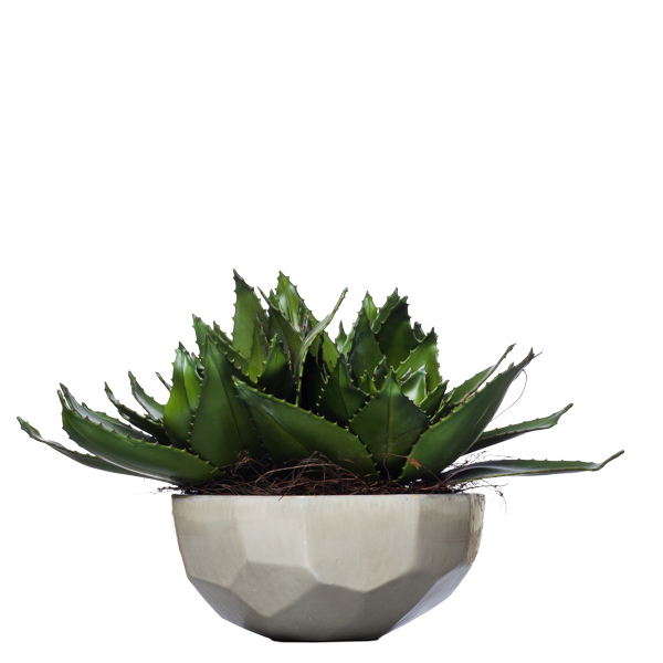Triple Aloe Bowl