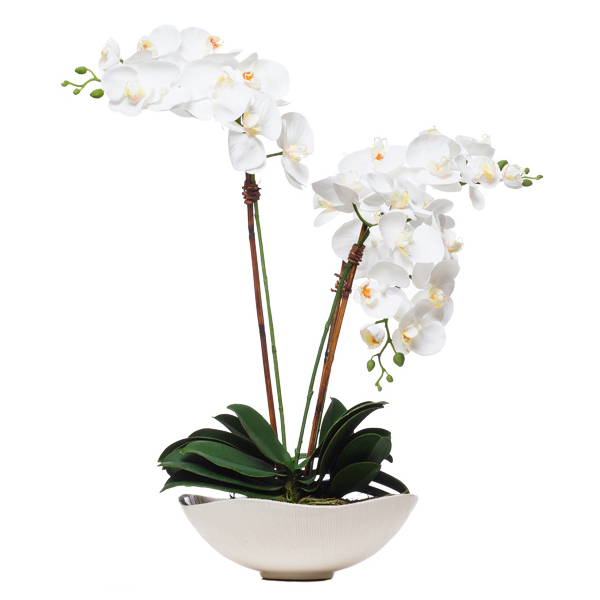 Triple Phalaenopsis in Way Bowl
