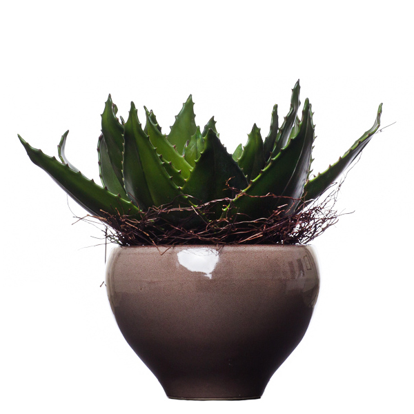 Large Aloe Bowl