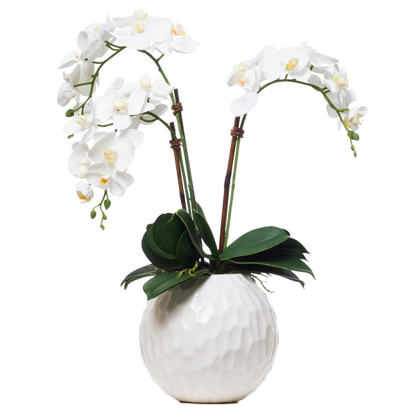Triple Phalaenopsis in White Ball Vase
