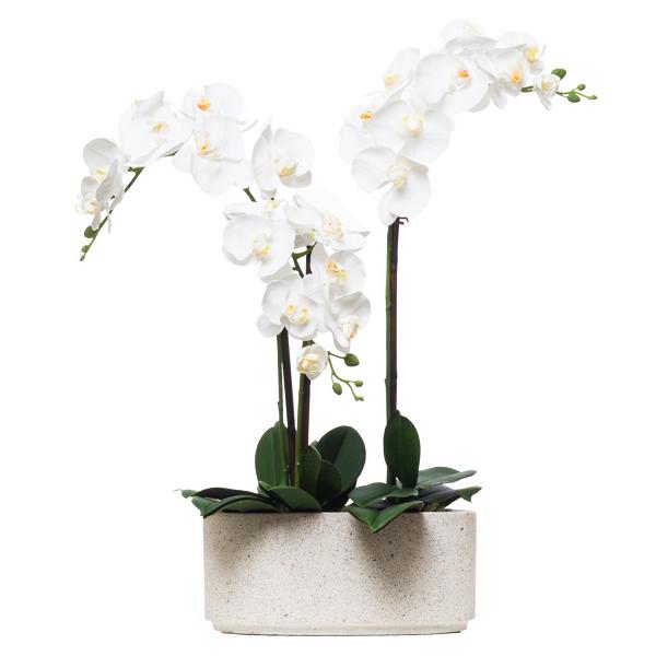 Triple White Phalaenopsis in White Terrazzo Oval Pot