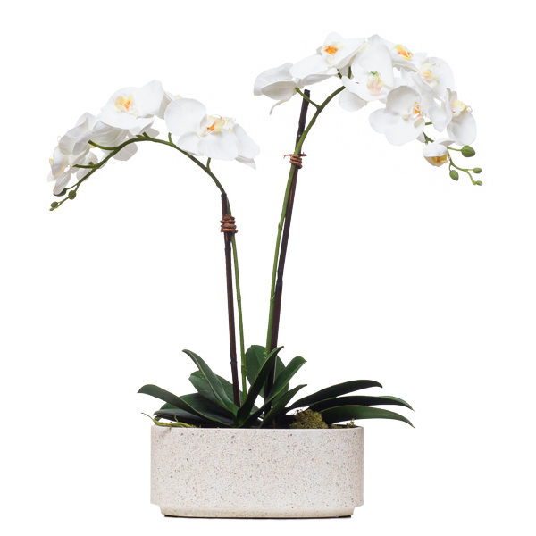 Double Phalaenopsis in Oval Terrazzo Pot