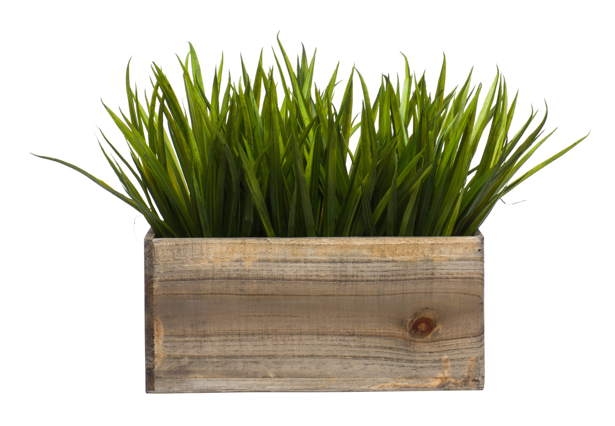 Grass in Small Wood Rectangle Box