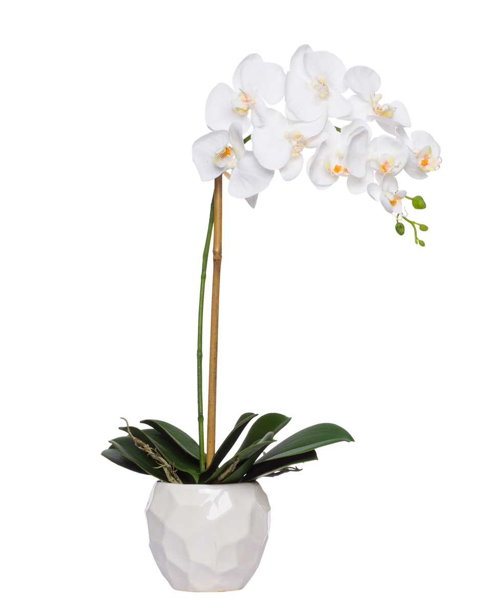 White Phal Single in White Chipped Pot