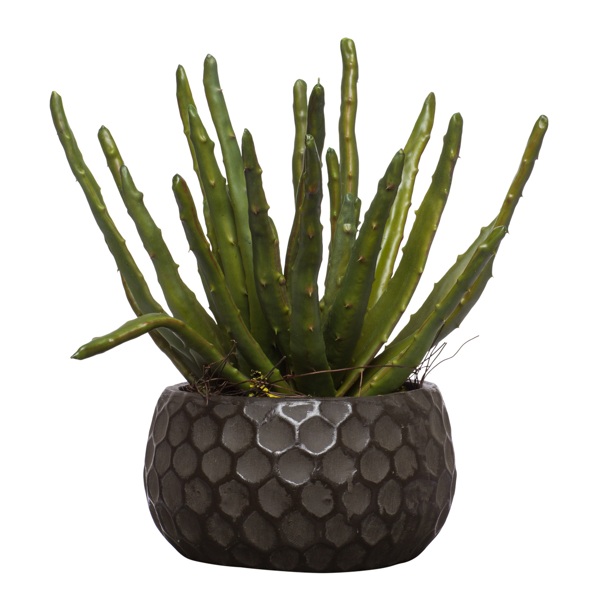 Aloe Pot in Medium Honeycomb Bowl