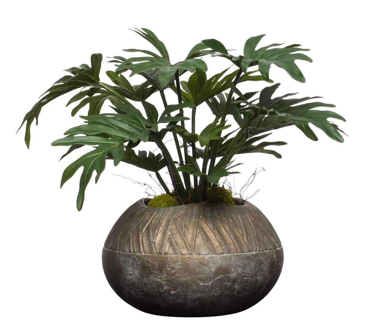 Selloum in Turban Pot
