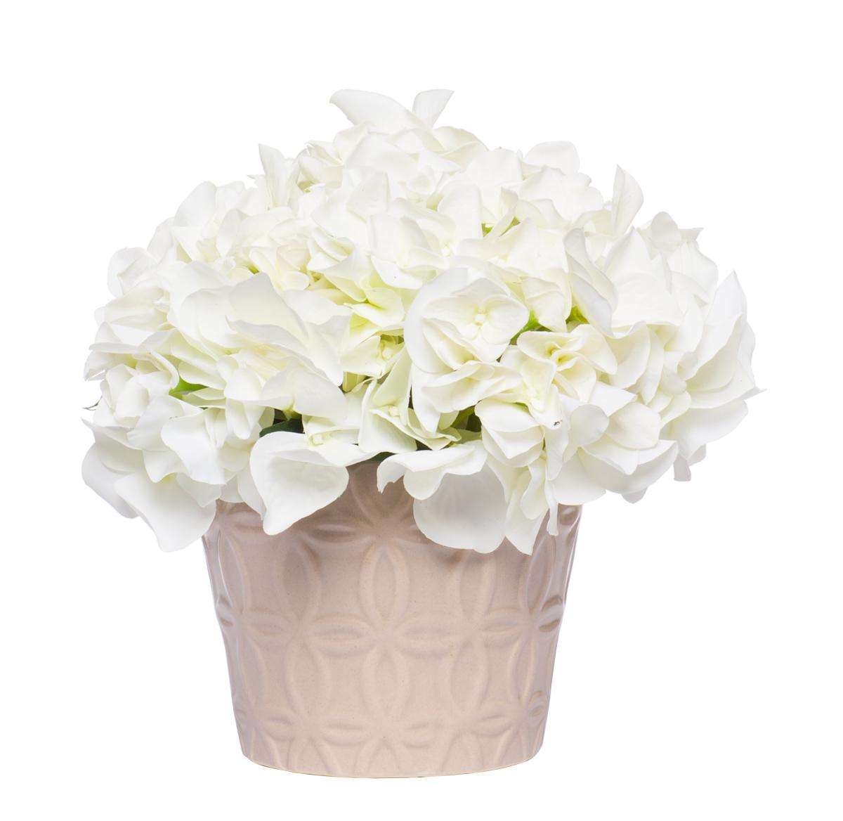 White Hydrangea in Insignia Pot