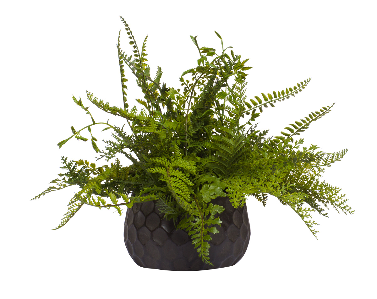 Mixed Fern Bush in Brown Dimple