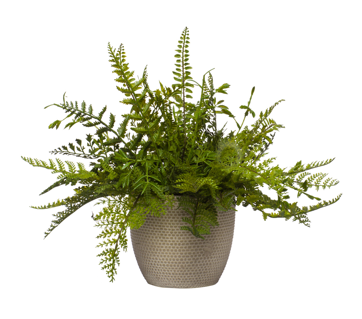 Mixed Fern in Beige Pot