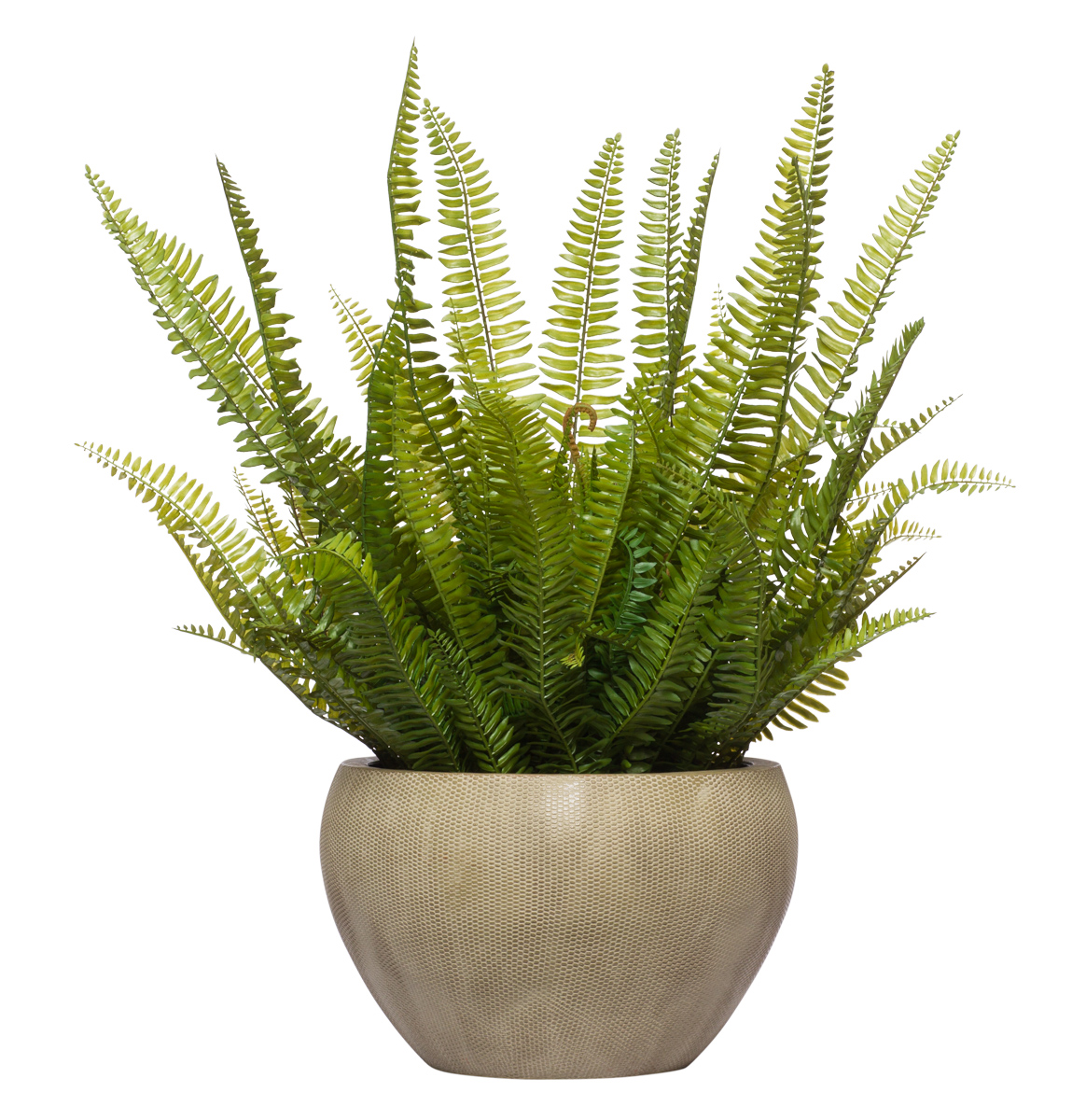 Straight Up Fern in Large Round Beige