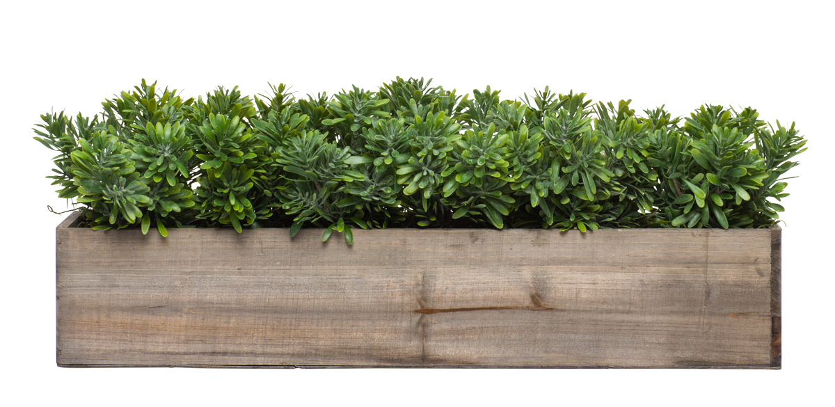 Wall Hanging w/ Succulents Grass in Long Wood Box