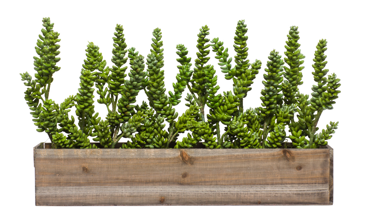 Wall Hanging w/ Donkey Tail & Succulent in Long Wood Box