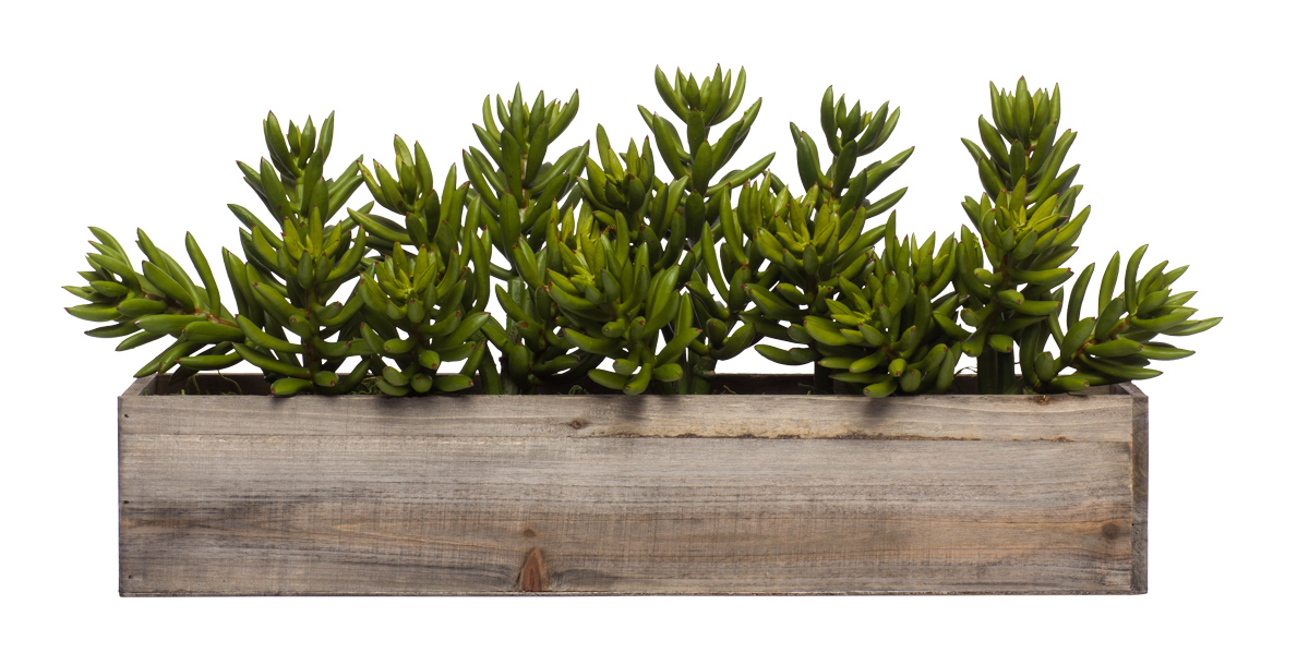 Wall Hanging w/ succulents & sedum in Long Wood Box