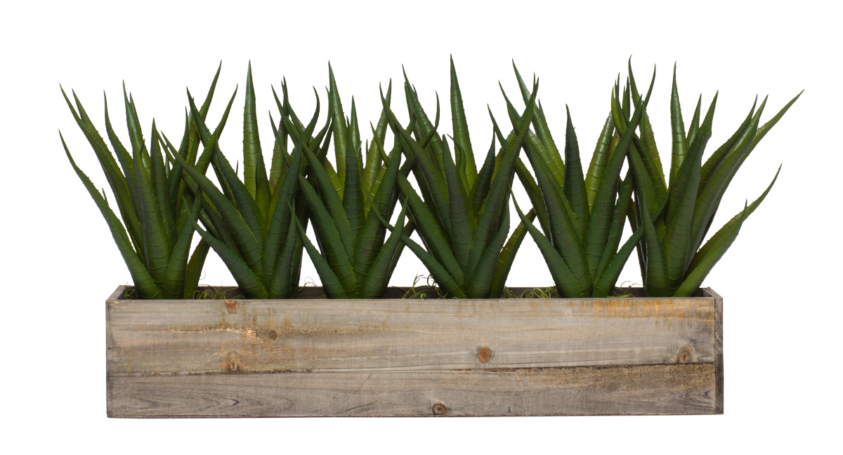 Wall Hanging w/ Aloe in Long Wood Box