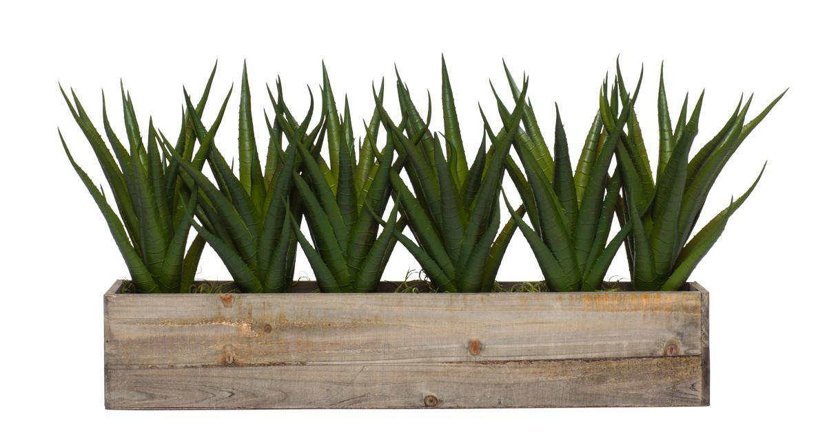 Wall Hanging w/ Aloe in Long Wood Box