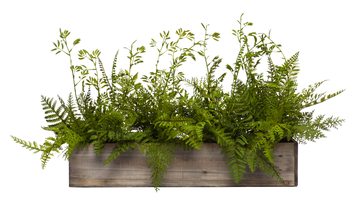 Wall Hanging Mix Fern in Long Wood Box