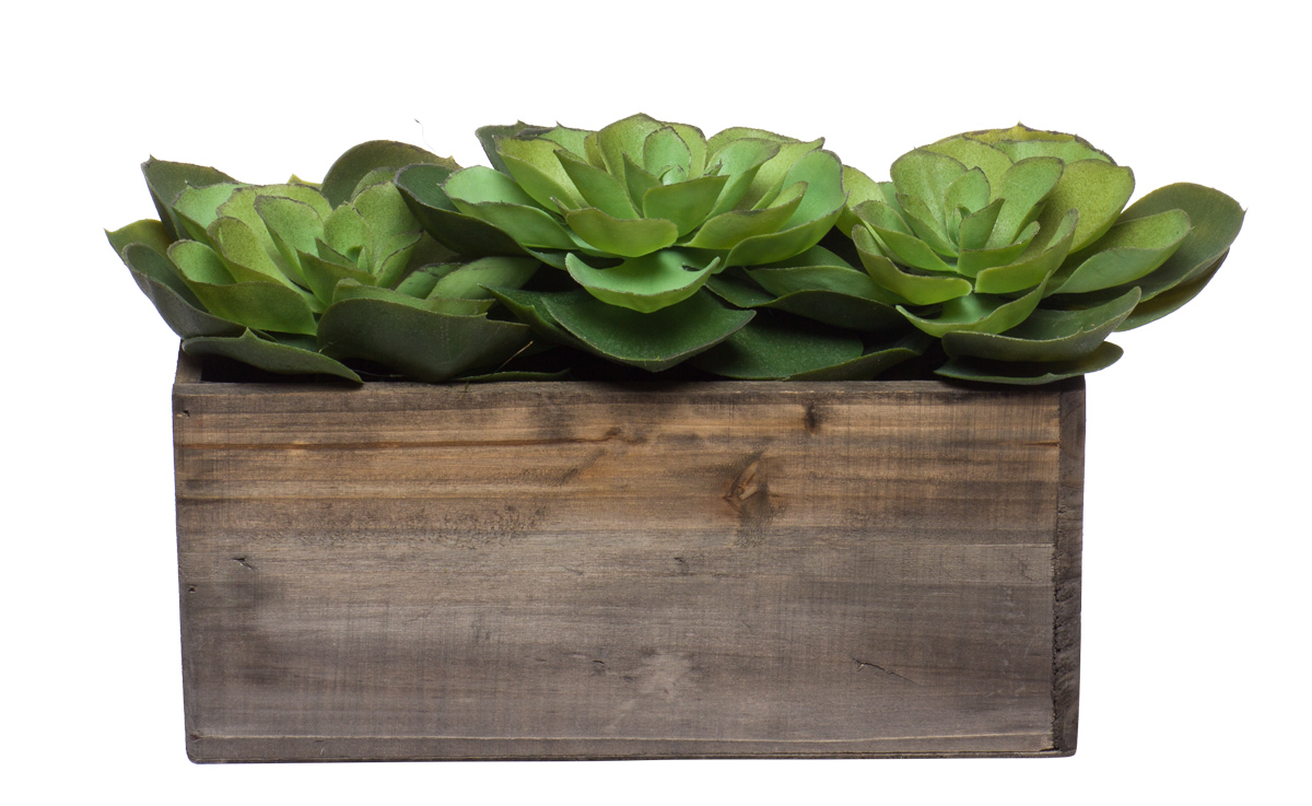 Wall Hanging w/ Flat Echevaria in Small Wood Box