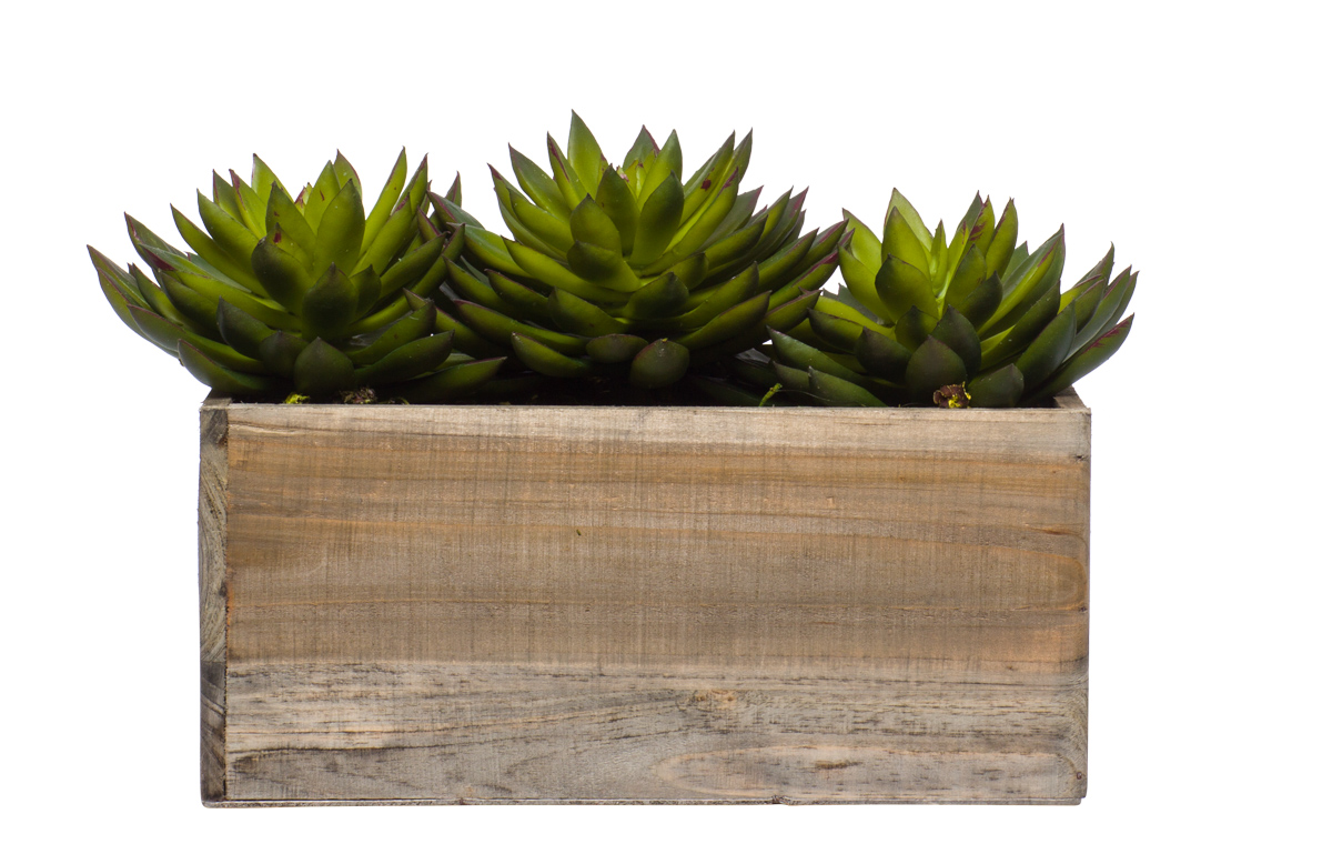 Wall Hanging W/ echevaria in Small Wood Box