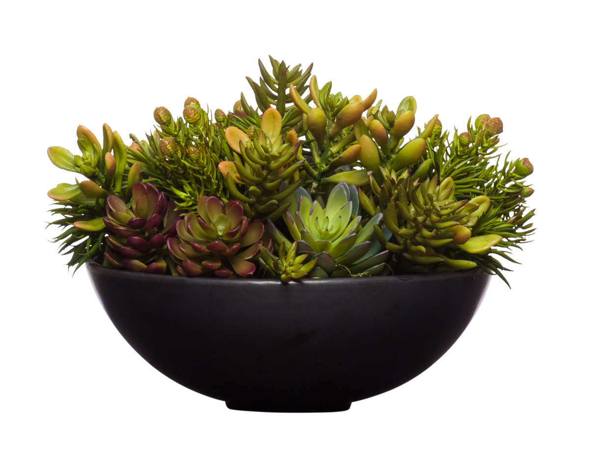 Mixed Mini Succulent in Black Bowl