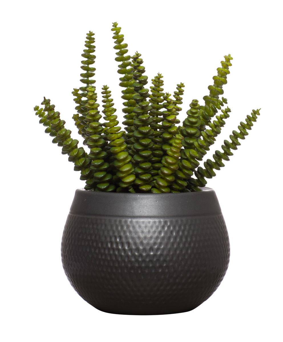 Succulent in Black Dimple
