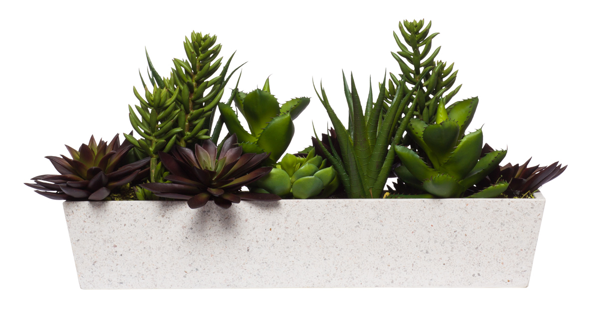 Succulent in Large Rectangle Terrazzo White