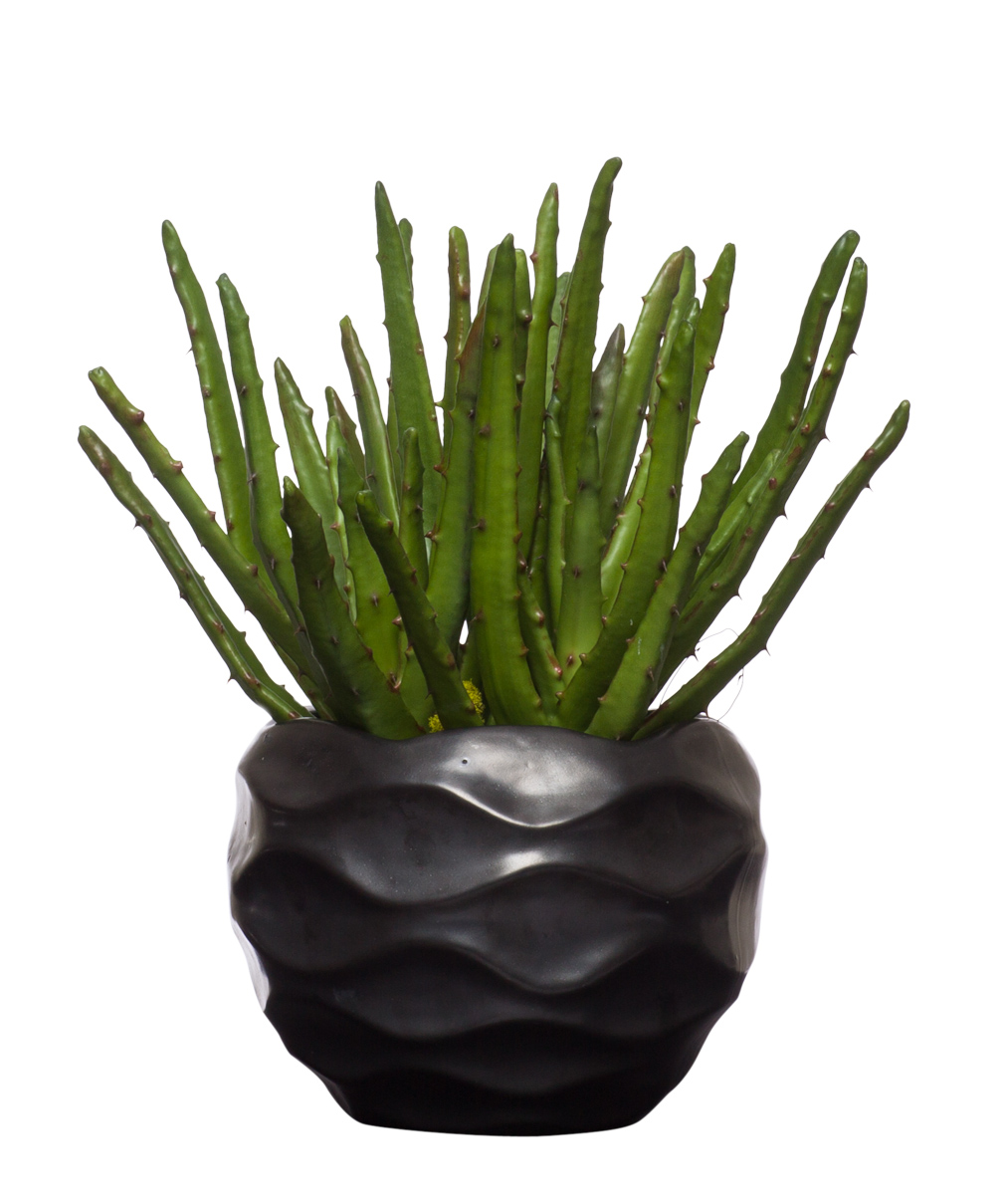 Aloe in Small Black Wavy Pot