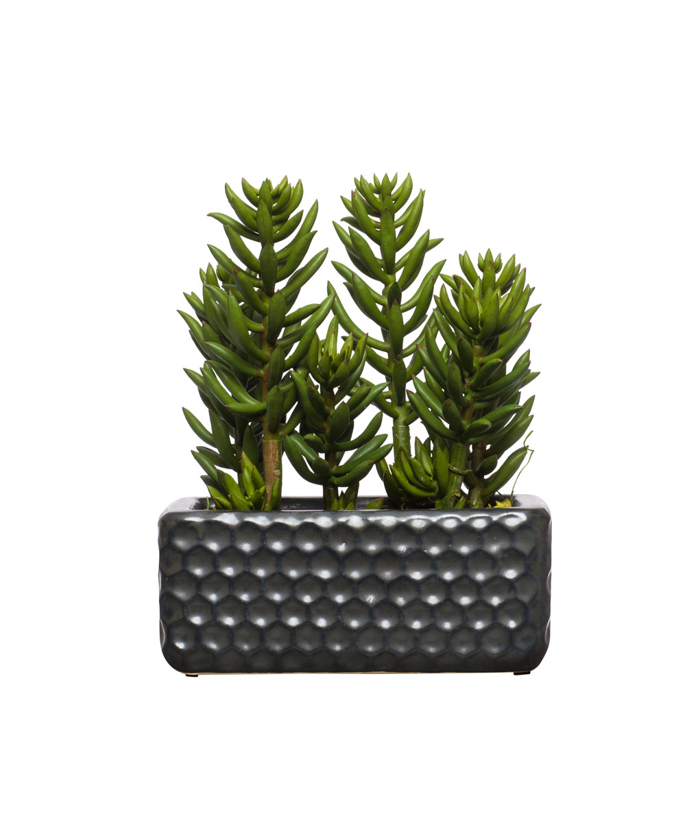 Succulent in Black Small Honeycomb Planter