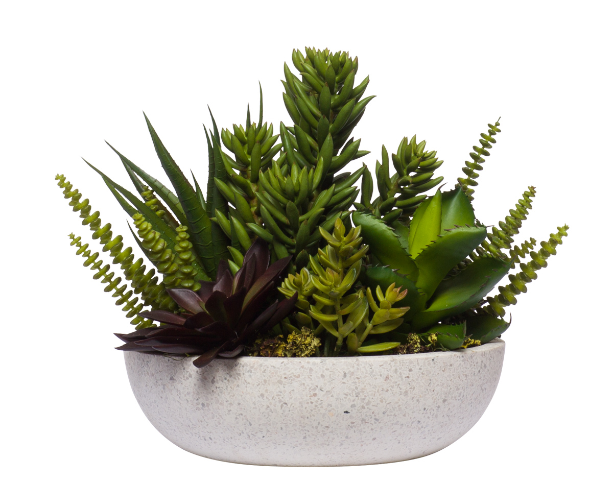 Succulents in White Terrzaao Bowl