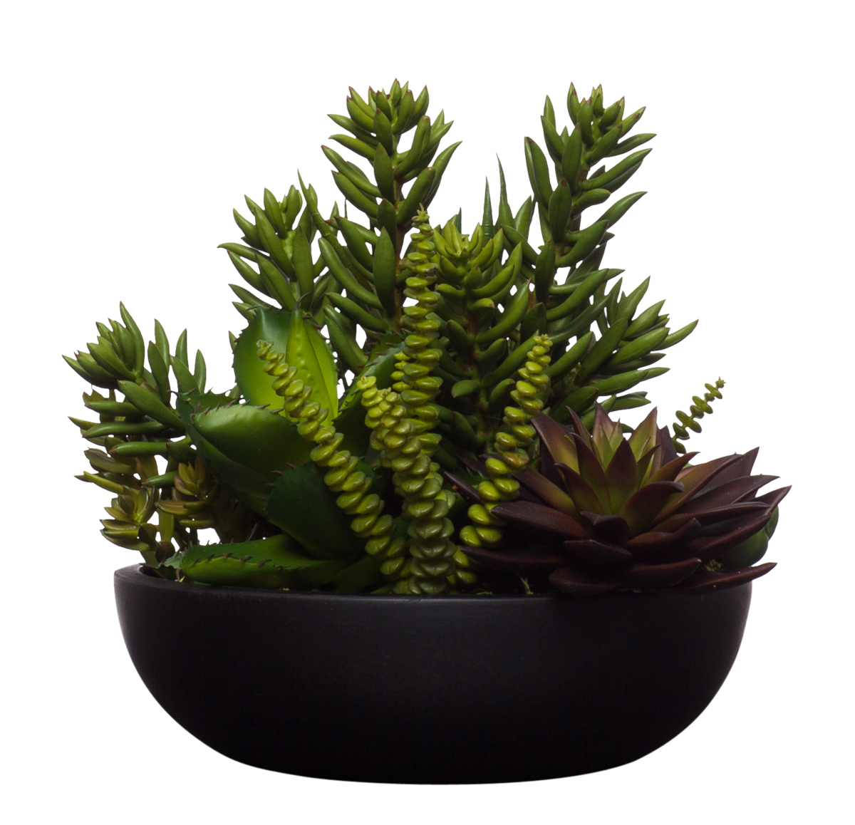 Succulents in Black Terrzaao Bowl