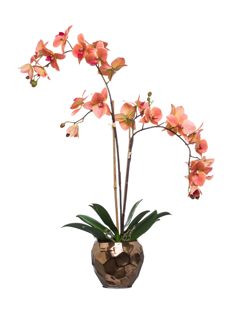 Coral Phal in Copper Pot