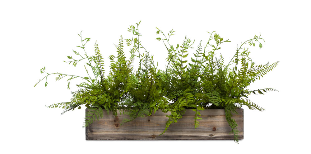 Mixed Fern in Long Wood Box