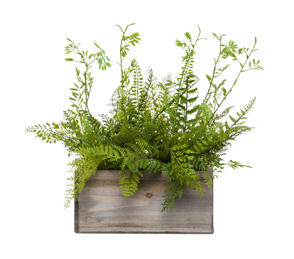 Mixed Fern in Small Wood Box