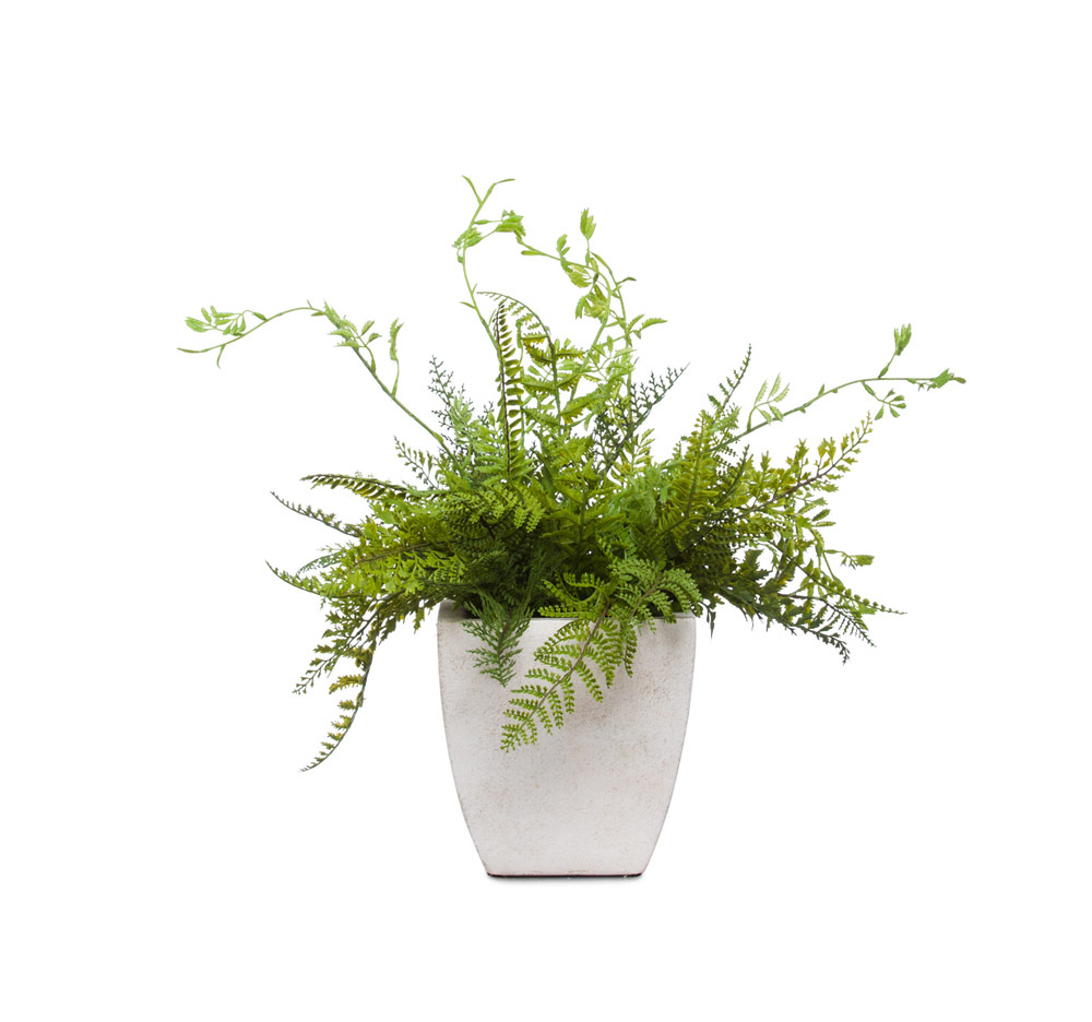 Mixed Fern Bush in White Square Pot