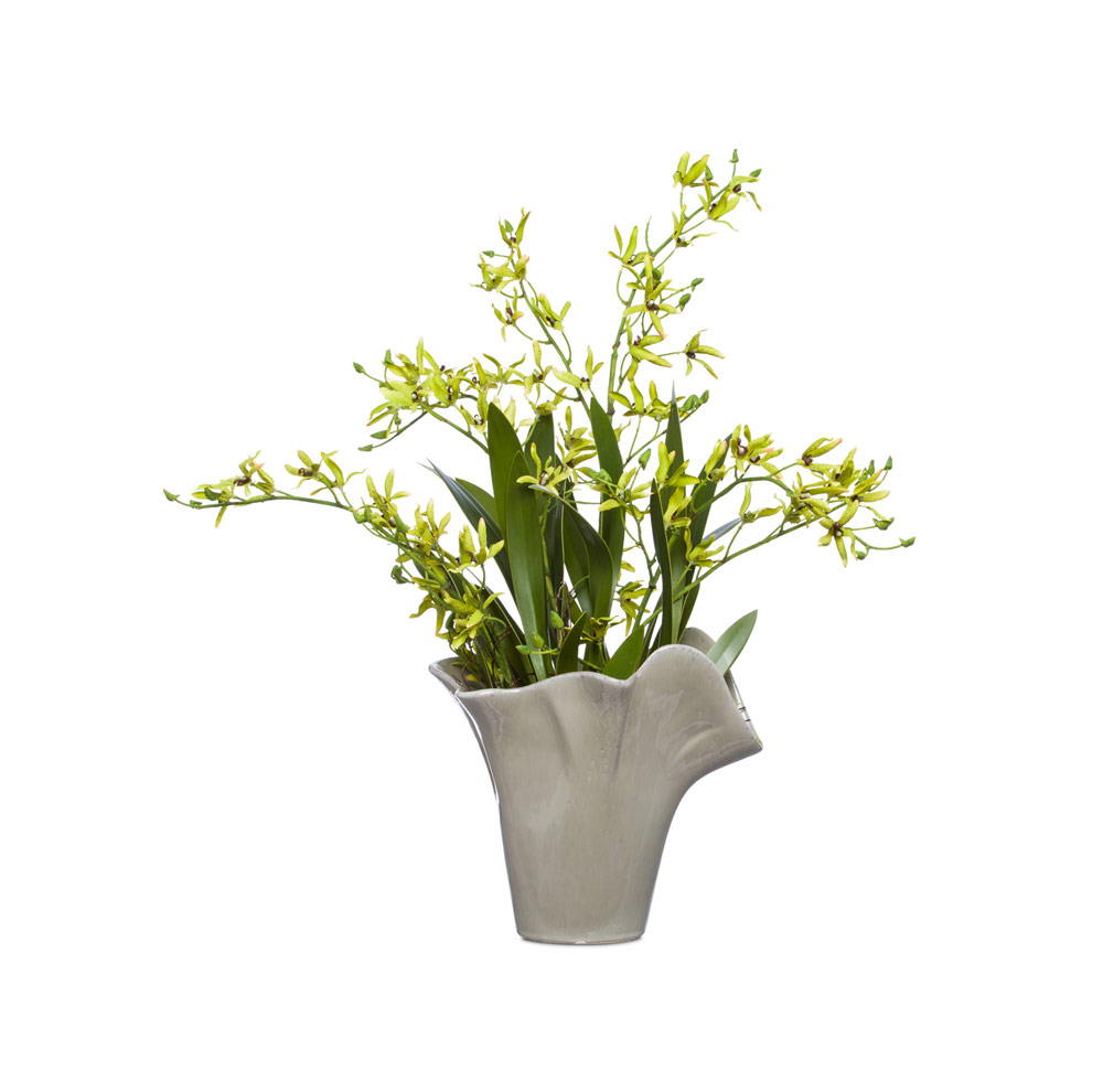 Green Dendrobian Orchid in Grey Cont.
