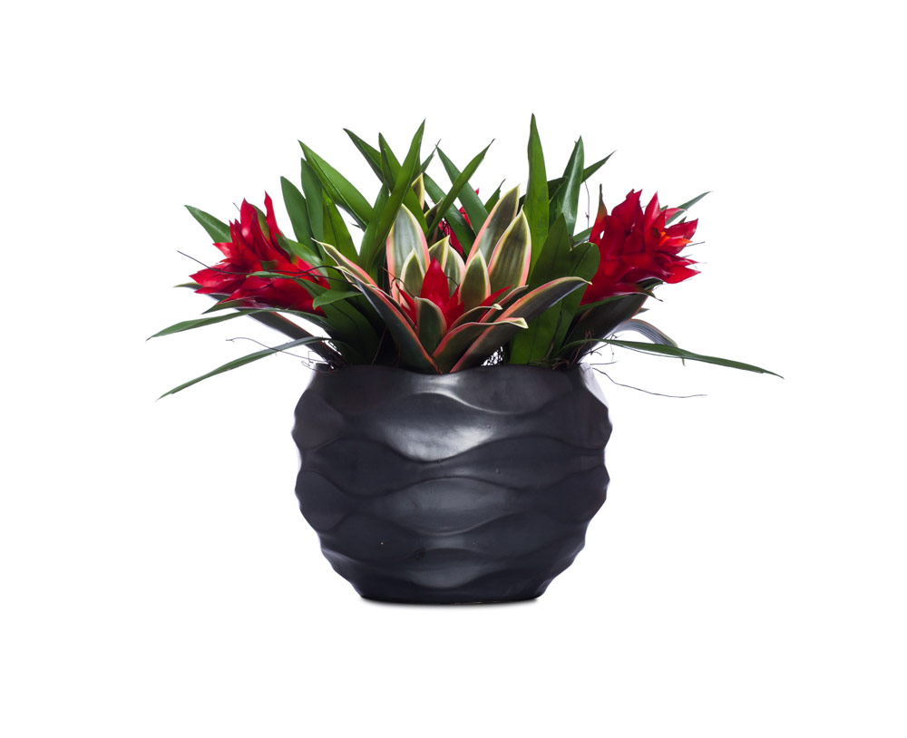 Bromiliads in Large Wavy Bowl
