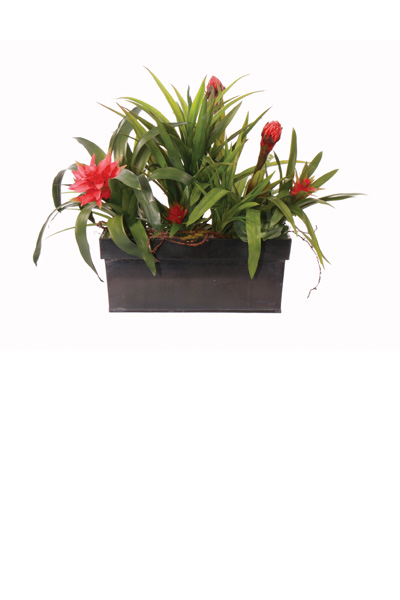 Bromelliad Planter