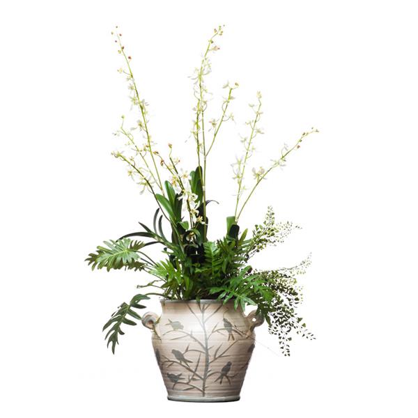 Vandas in Lg. Bird Vase