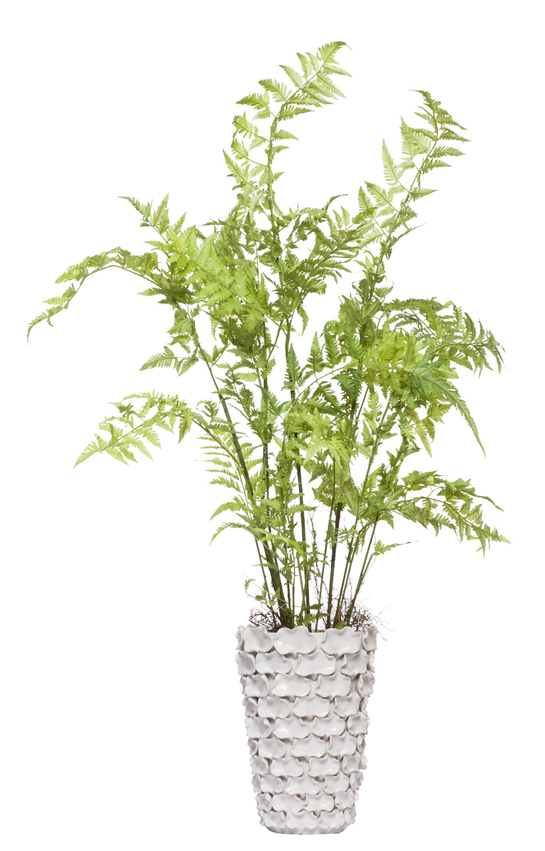 **Tree Fern in White Truffle Vase