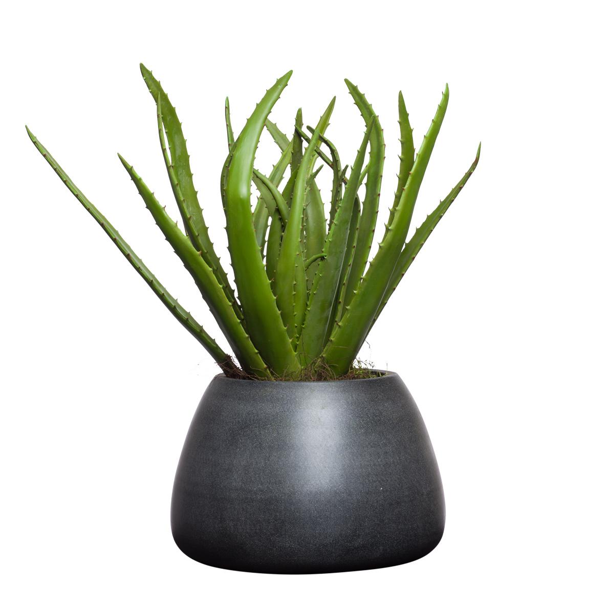 ** Aloe in Grey Terrazzo Round Squat Pot