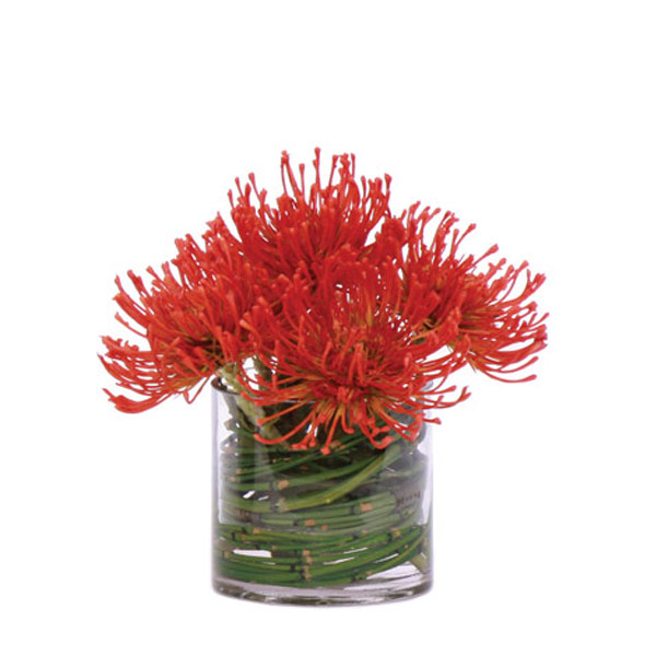 Pin Cushion Bamboo Waterlike