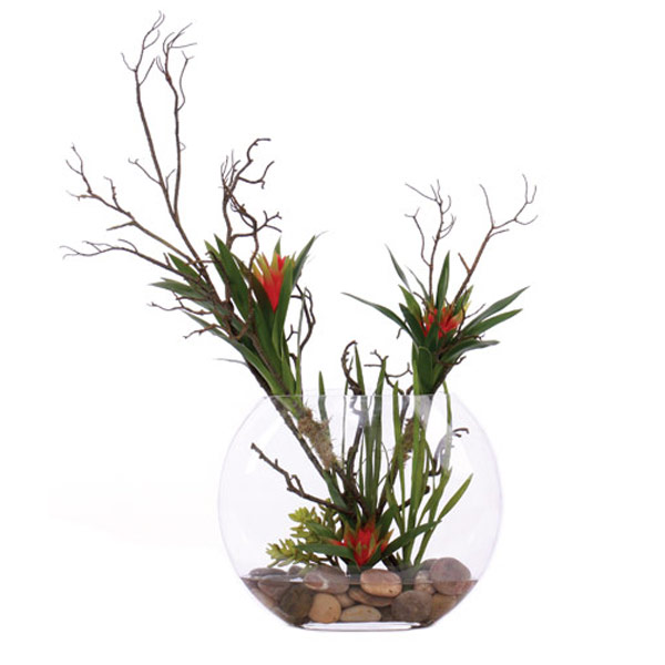 Bromeliad Branch Waterlike