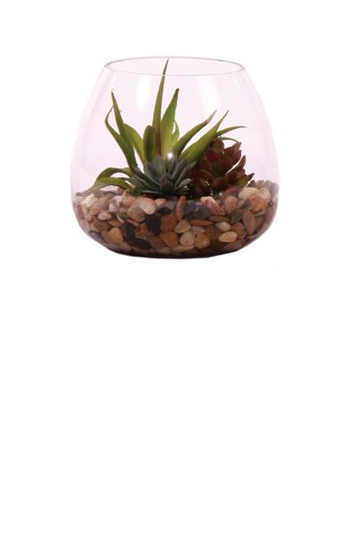 Succulent Terrarium Waterlike