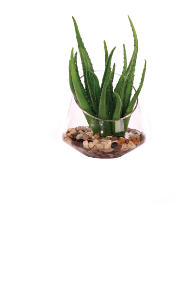 Aloe Vase Waterlike